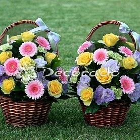 Żywe kolory kwiatów