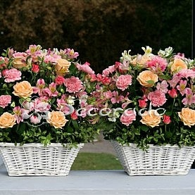 Delikatny róż i łosoś